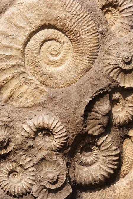dreams-fossil